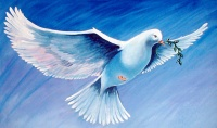 duif ware vrede