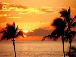 15.palmbomen
